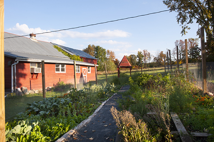 picture of the garden with separated beds, the red barn studio off to the right